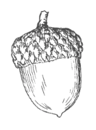Illustrated Acorn Image